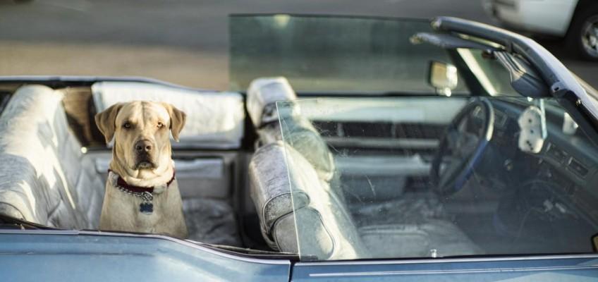 Jak zabavit psa na cestách?
