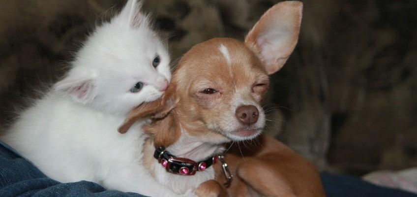 Galerie: 15 důkazů, že psi a kočky nemusí být vždy nepřátelé