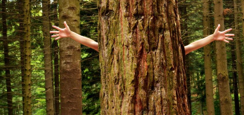 5 tipů, jak začít žít zeleně