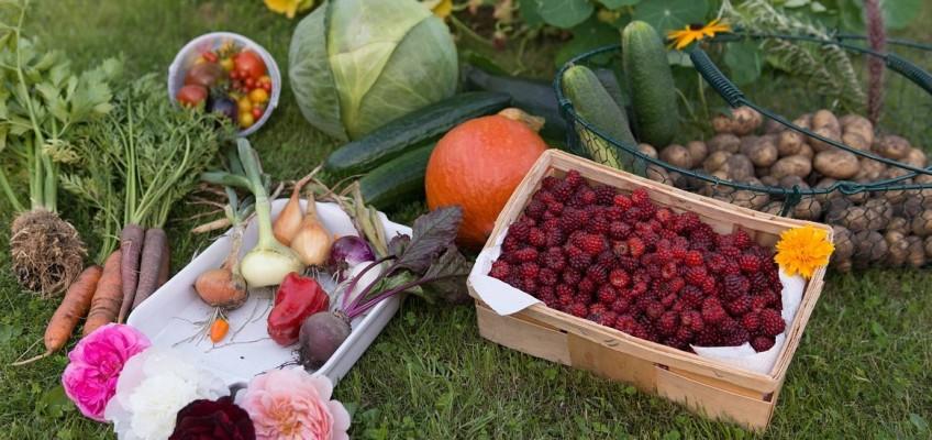 Podzimní zahrada nabízí bohatou úrodu. Tipy, jak ji zpracovat na zimu.
