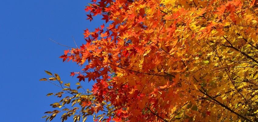 Podzimní zdravotní rizika