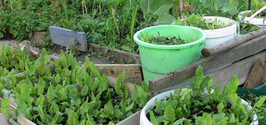 Ušetřete za potraviny, pěstovat zeleninu můžete i na balkoně