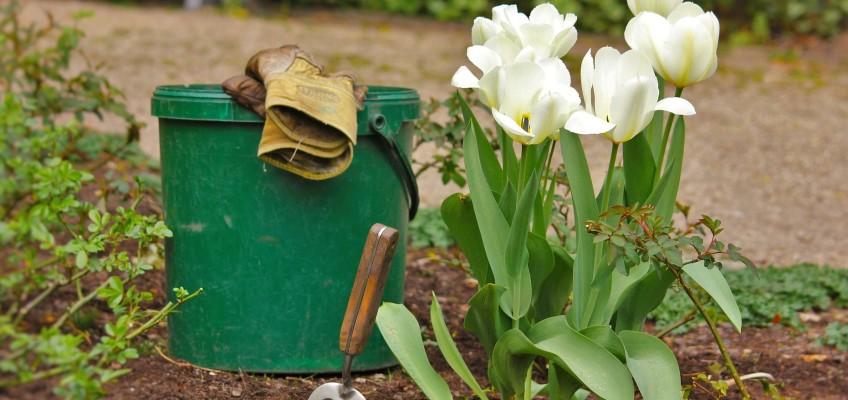 Za co se bude letošní léto nejvíce utrácet? Češi se chystají zahradničit!