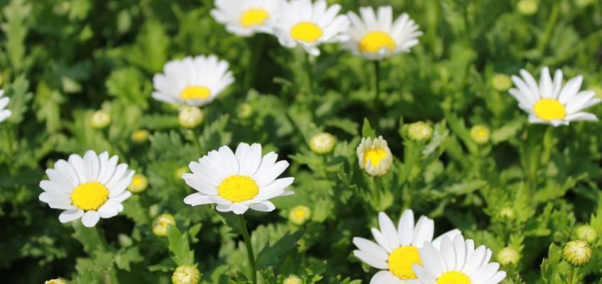 Homeopatie – šarlatánství nebo spolehlivá léčebná metoda?