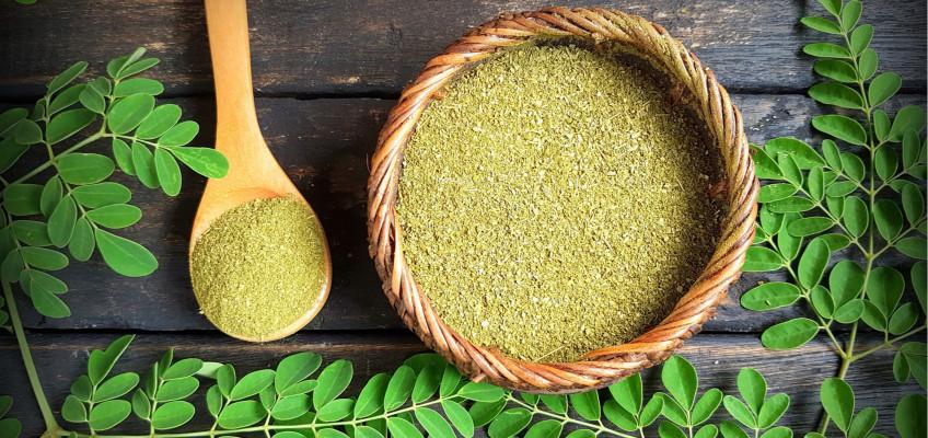 Moringa olejodárná – strom života i pramen mládí