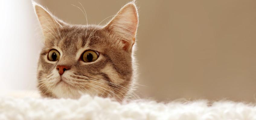 Průvodce kočičími krmivy. Jak vybrat to nejlepší
