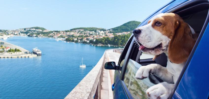 4 tipy pro bezpečné a komfortní cestování se psem